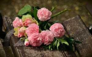 京都府立植物園のバラの見頃2021|園内散策に疲れたらカフェで休憩!